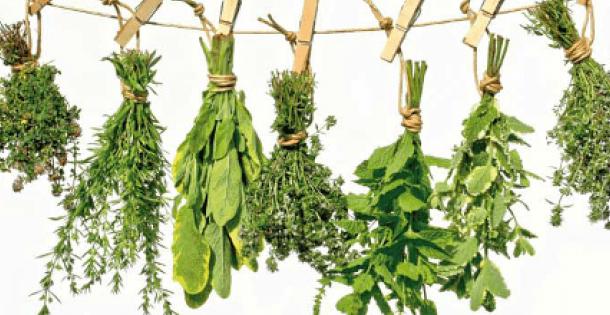 plantas maya
