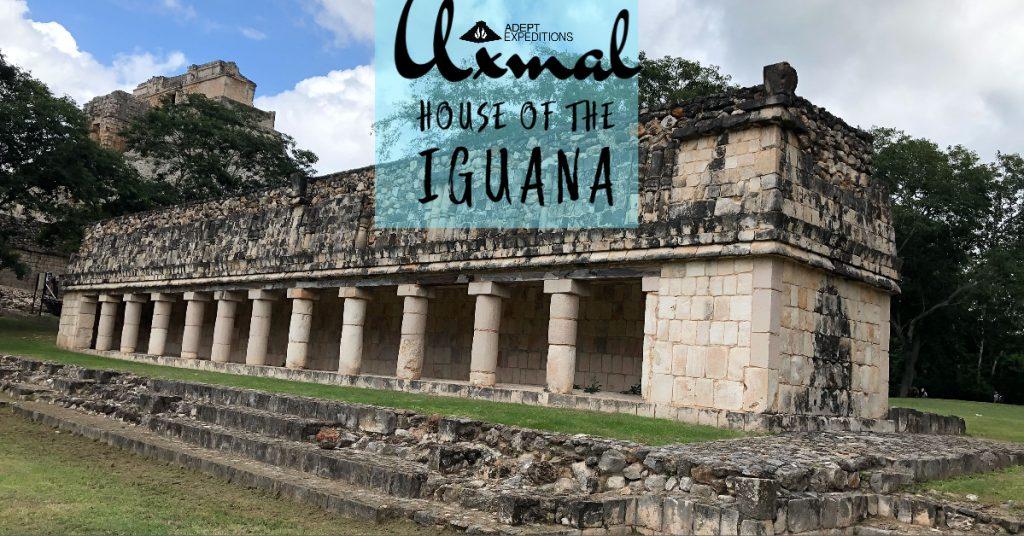 house-iguana-uxmal
